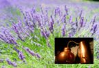 Predavanje Daniela Oberstar - Destilacija aromatičnih rastlin