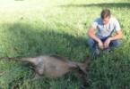 V Lipovšici pri Sodražici medved pokončal štiri koze