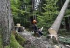 Delovna nesreča v gozdu, Fotografija je simbolična. (Foto: Blaž Samec/Delo)