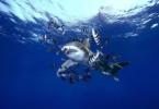Pod morjem okoli sveta, Andrej Voje